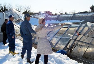 倒壊した農業用ハウスを視察する(右から)柳下、村岡県議ら=2014年2月18日、深谷市